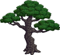 GiantBonsaiTree.png